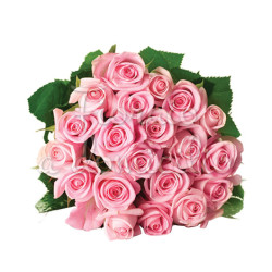 20_rose_rosa