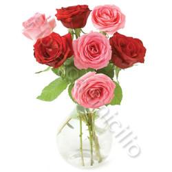sette_rosse_rose_rosa