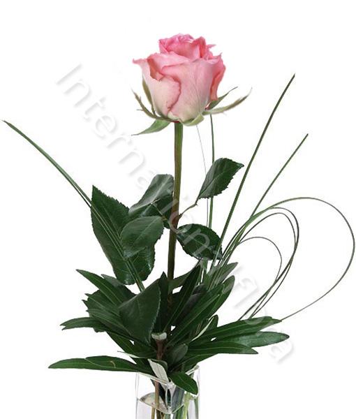 rosa-rosa1.jpg